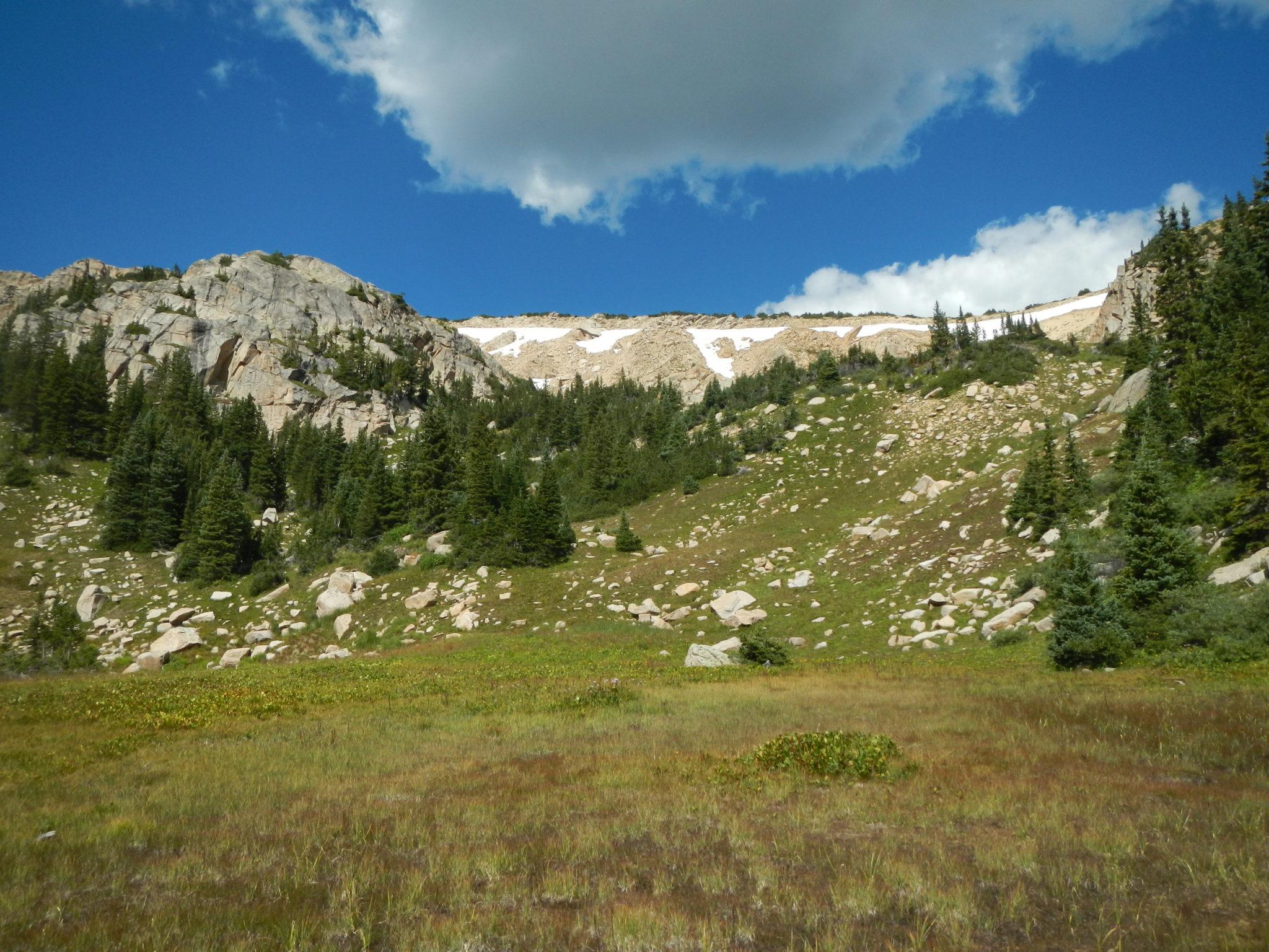 alpine wetland