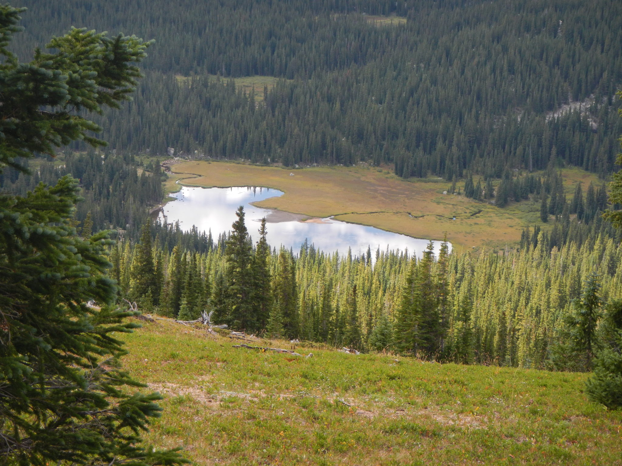 overlooking mountain lake with pine and spruce trees