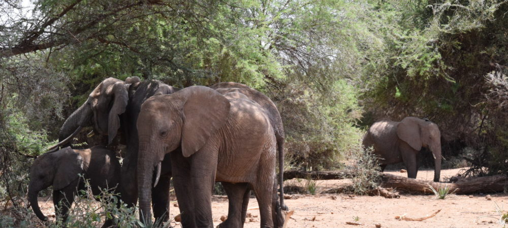 a color photo of an orphaned elephant, not socializing with other elephants