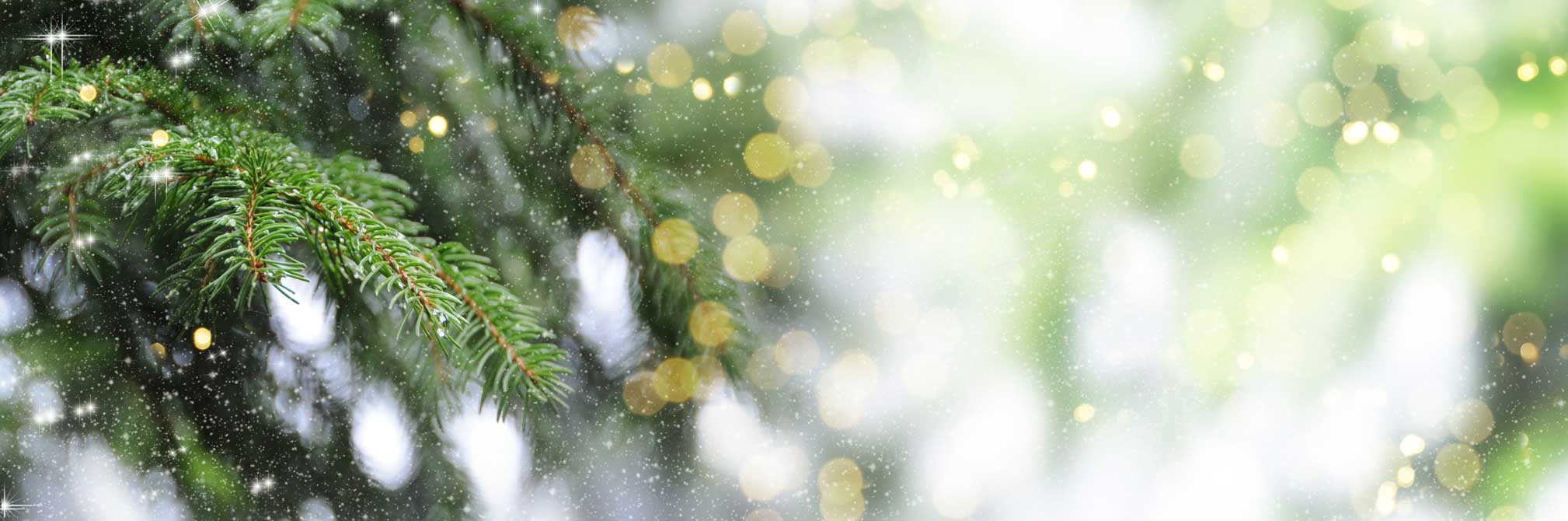 conifer tree with lit bokeh