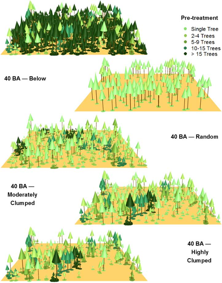 three dimensional forest visualizations