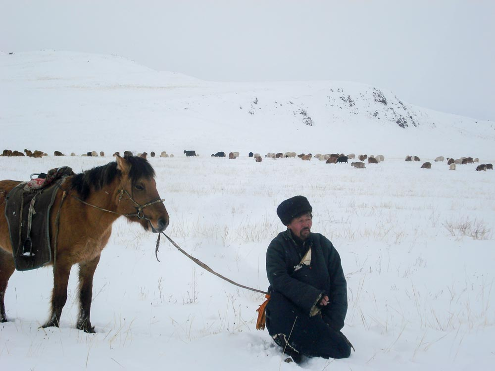 color photo of a herder with his sheep during a harsh winter in the west central part of Mongolia
