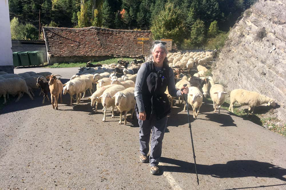 women walking with sheep