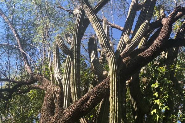 cactus and trees