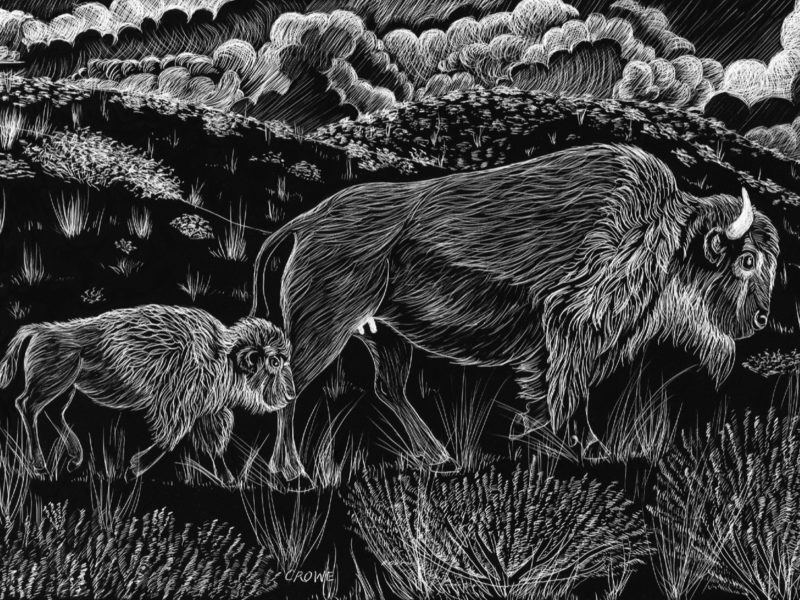 etching of bison