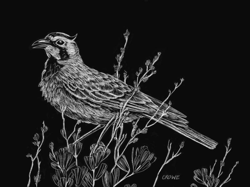etching of a bird