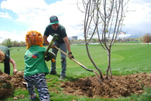 a small child and dad plant a tree on the CSU campus