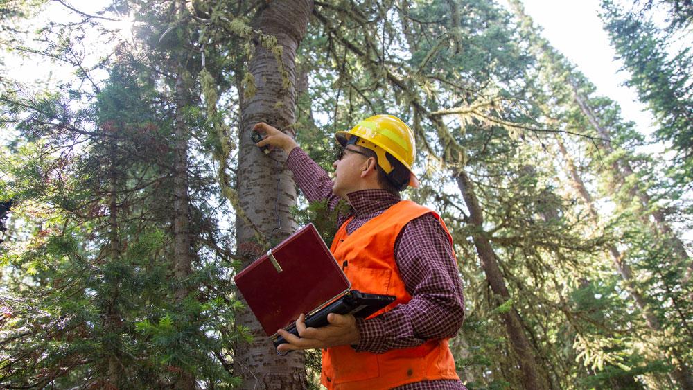 CSU researcher checks data logger on tree