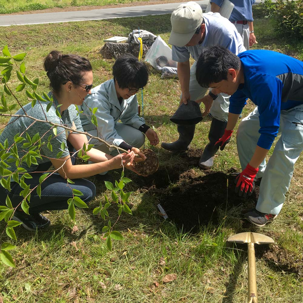 Beech Tree Planting CSU and Yamagata students