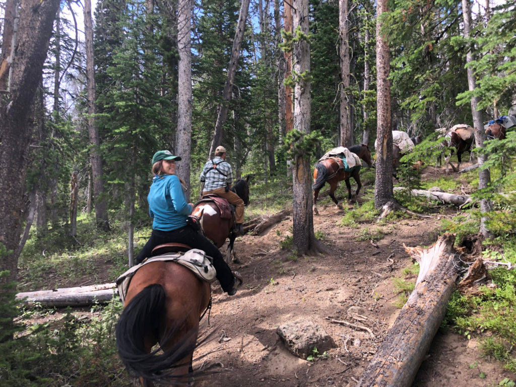 students and foresters use pack horses to reach back country plots in Yellowstone National Park