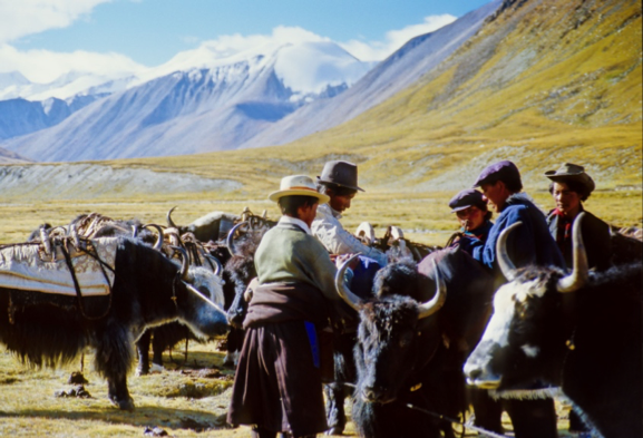 people from a village in the mountains, with yaks
