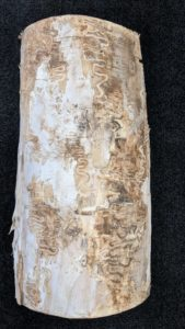 a chunk of wood from a tree affected by emerald ash borer