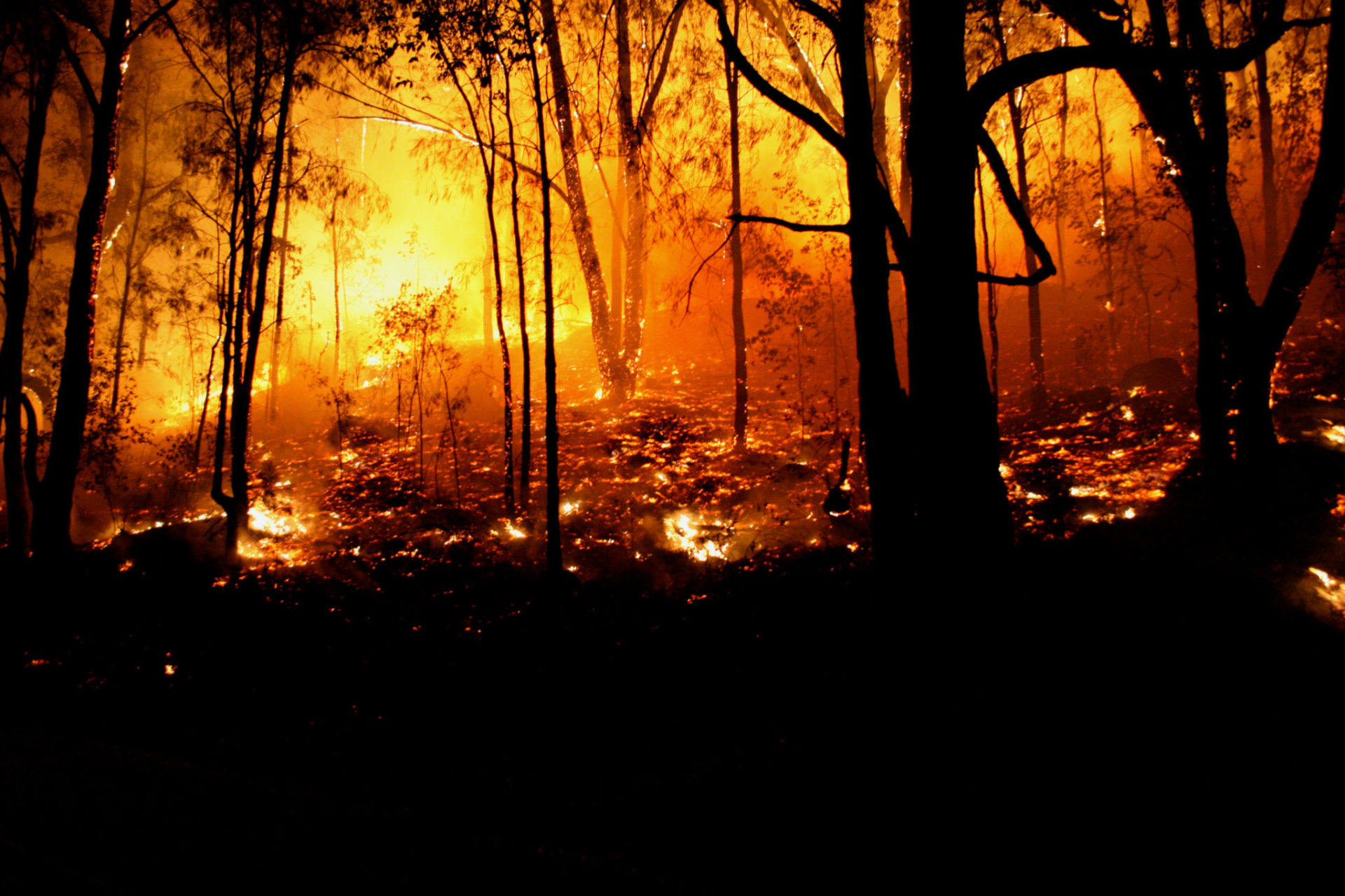 close-up shot of a wildfire in Australia