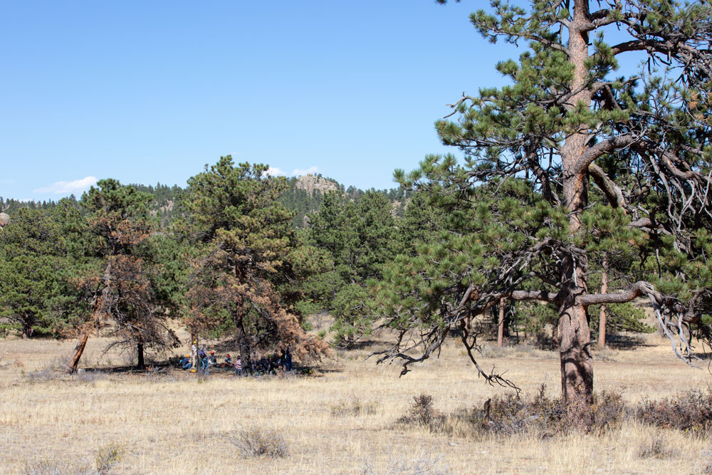 foresters in a ponderosa pine forest after prescribed burn