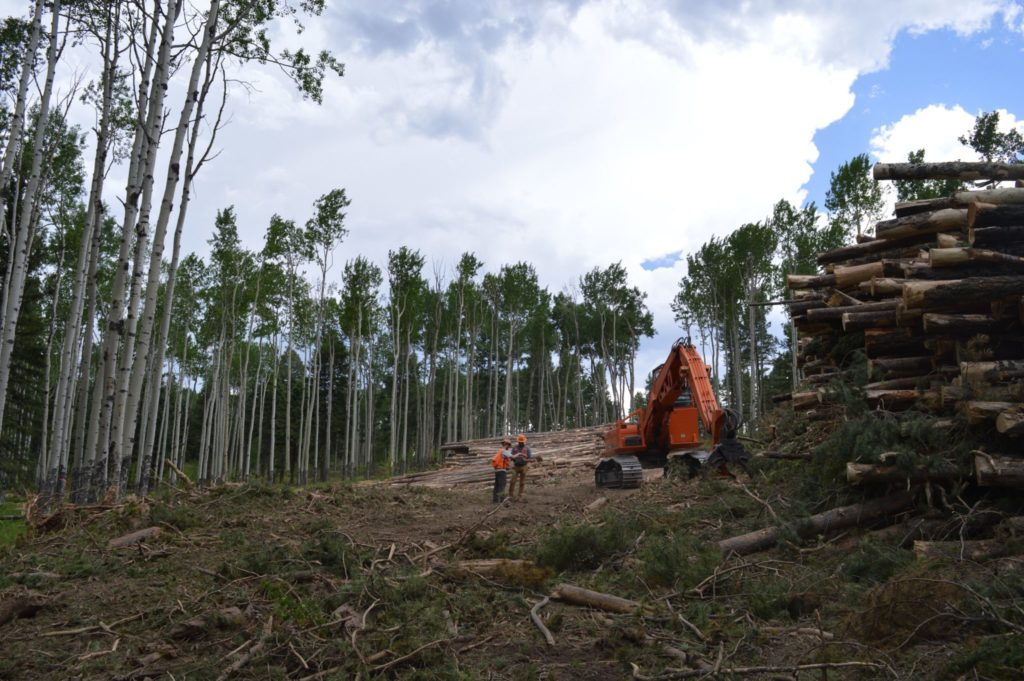 Foresters harvesting wood during the Heavens Project near Conifer, Colorado