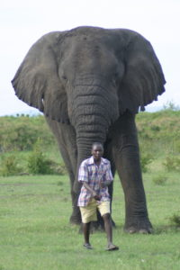 KAZA farmer with Savannah elephant