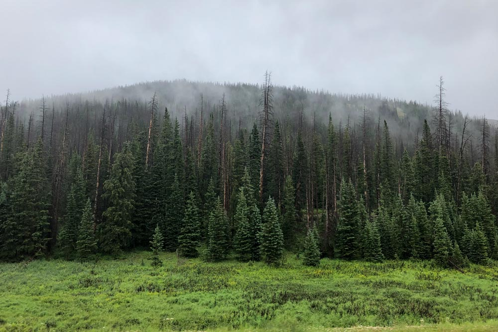 Spruce beetle affected forest and low clouds