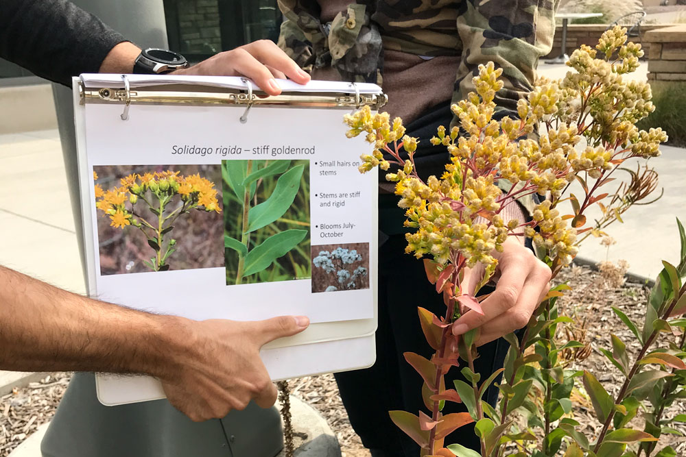 CSU restoration students identify a plant with a book