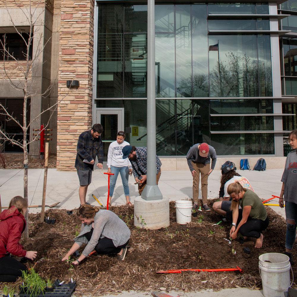 CSU restoration students planting