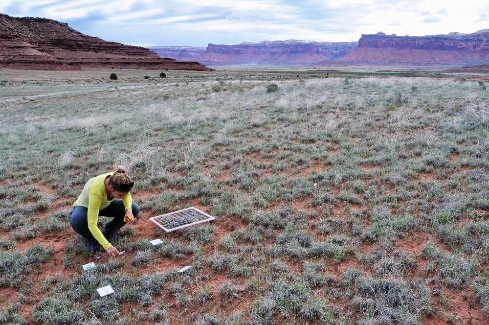 Rangeland researcher in canyon desert