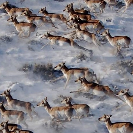 CSU scientists join first global initiative to map mammal migrations - Warner College of Natural Resources
