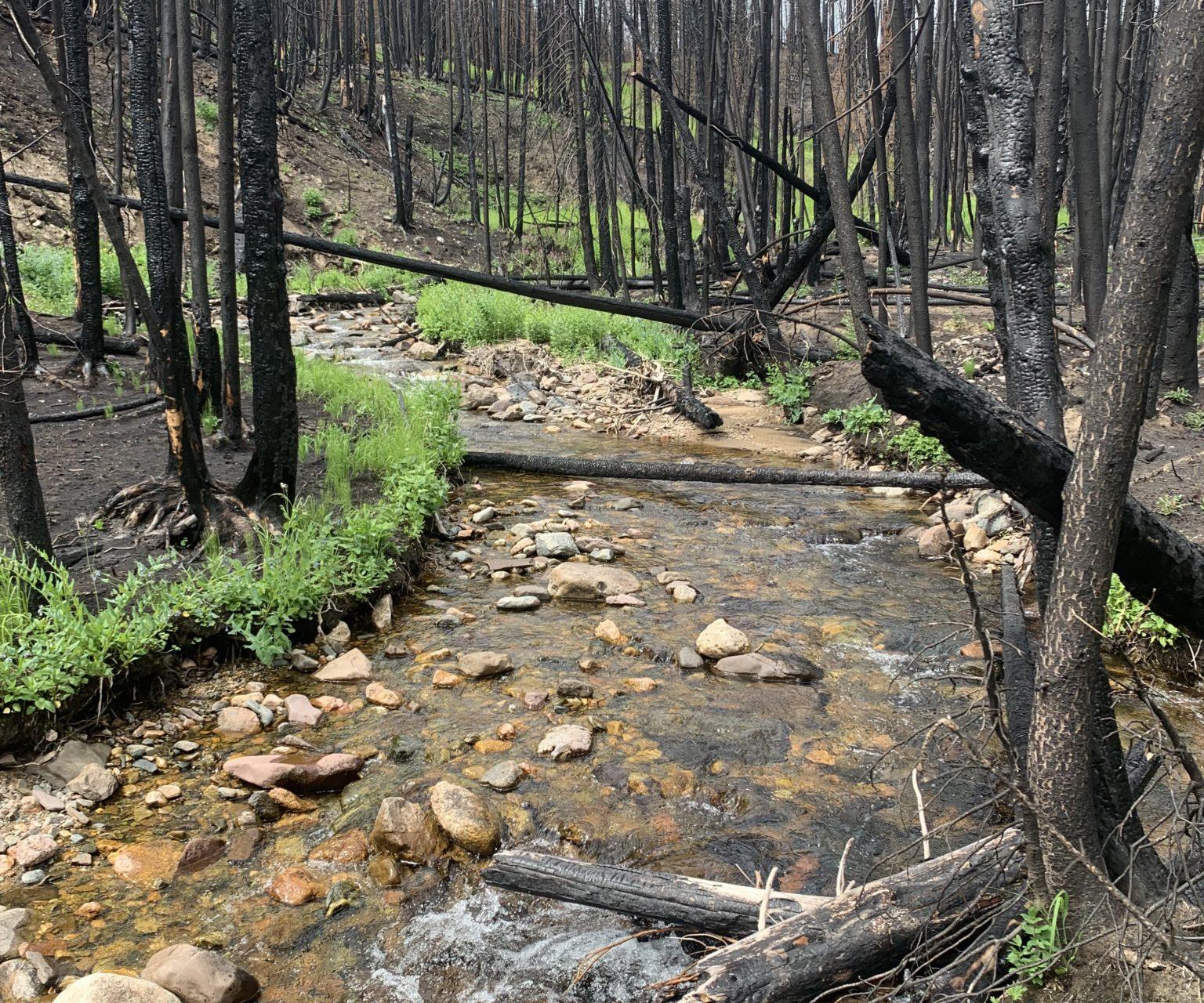 a burned stream at North Fork Joe Wright Creek